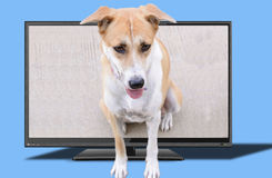 Dog pop up out tv Royalty Free Stock Photography
