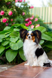 Dog on the porch Royalty Free Stock Photos