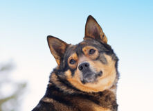 Dog portraiit Stock Photography
