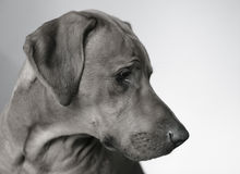 The dog portrait stock photography