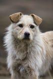 Dog portrait. Golden dog portrait, funny expression Stock Photo