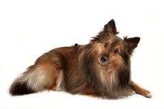 Dog portrait royalty free stock photography
