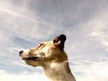 Dog portrait (191) Royalty Free Stock Image