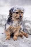 Dog portrait Stock Images