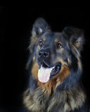 Dog Portrait. Portrait Of A Mixed Breed Dog Stock Image