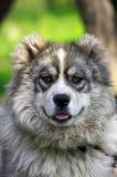 Dog portrait Stock Images