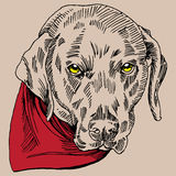Dog Portrait stock image