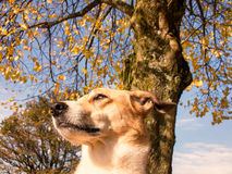 Dog portrait Royalty Free Stock Photography