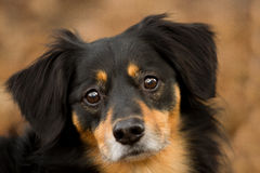 Dog Portrait Royalty Free Stock Images
