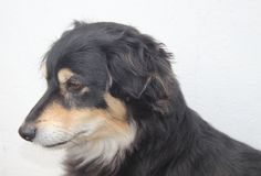 A dog portrait Stock Photos