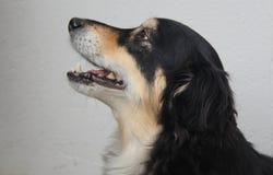 A dog portrait Stock Photo