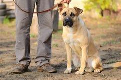 Dog portrait Stock Photos