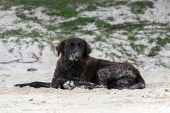 Dog covered by sand on the beach Royalty Free Stock Photography