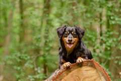 Dog Portrait. / Cute Dog / Dog Model Stock Image