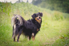 Dog Portrait. / Cute Dog / Dog Model Royalty Free Stock Image