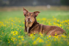 Dog Portrait. / Cute Dog / Dog Model Stock Images