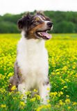 Dog Portrait. / Cute Dog / Dog Model Royalty Free Stock Photo