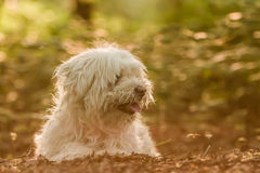 Dog Portrait. / Cute Dog / Dog Model Stock Photography