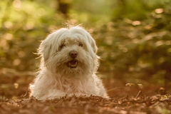 Dog Portrait. / Cute Dog / Dog Model Stock Photos