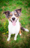 Dog Portrait. / Cute Dog / Dog Model Royalty Free Stock Photos