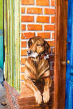 Dog portrait by the door. VALPARAISO - NOVEMBER 07: Street art in Concepcion and Alegre districts of the protected UNESCO World Heritage Site of Valparaiso on royalty free stock images