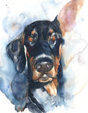 Dog portrait German doberman watercolor painting illustration isolated on white background. Dog portrait German doberman breed watercolor painting illustration stock illustration