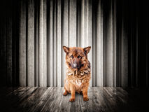 Dog portrait Royalty Free Stock Photos