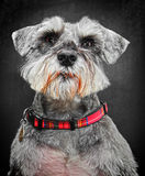 Dog portrait Stock Photography