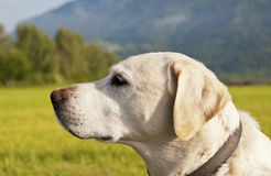 Dog. Portrait in landscape royalty free stock photo