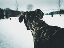 Dog looking away in snow stock photo