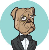 Dog portrait with monocle Stock Photography
