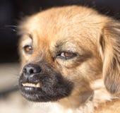 Dog portrait in nature Stock Photo