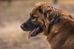 Dog portrait in the park Royalty Free Stock Photo