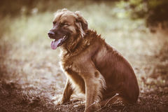Dog portrait in the park Stock Photos