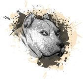 Animal collection: Dog. Portrait of a Pitbull. Closeup on a white background, with elements of squirt and drip paint. royalty free illustration