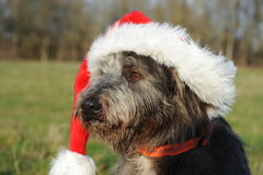 Dog Portrait with santa hat Royalty Free Stock Photo