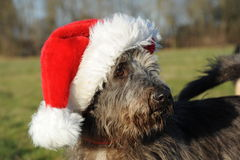 Dog Portrait with santa hat Royalty Free Stock Image