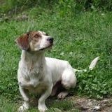 Dog portrait Stock Photography