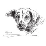 Dog portrait sketch Stock Photos
