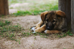 Dog. Portrait of small beautiful dog Stock Image