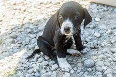Dog. Portrait of small beautiful dog Stock Photo
