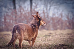 Dog Portrait. A dog is standing in a field and looks into the distance Stock Photo
