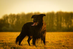 Dog Portrait. A dog is standing on a meadow Stock Image