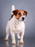 Dog Stock Photography