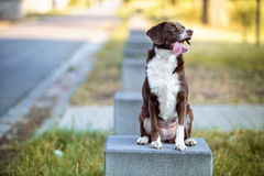 Dog Portrait Royalty Free Stock Images