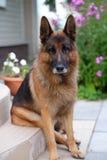 Dog portrait. royalty free stock image