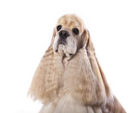 Dog  portrait on white background Royalty Free Stock Photos