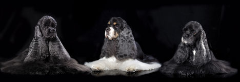 Dog  portrait on white background Royalty Free Stock Photography