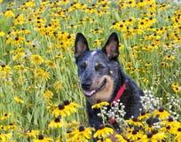 Dog Portrait in Wildflowers Royalty Free Stock Photo
