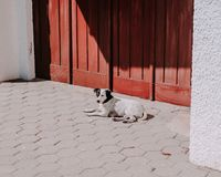 Dogs at the floor close to red door stock photography